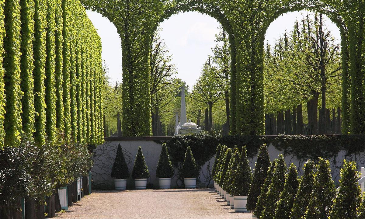 Baumreihen im Schlossgarten Schwetzingen; Foto: Staatliche Schlösser und Gärten Baden-Württemberg, Uschi Wetzel