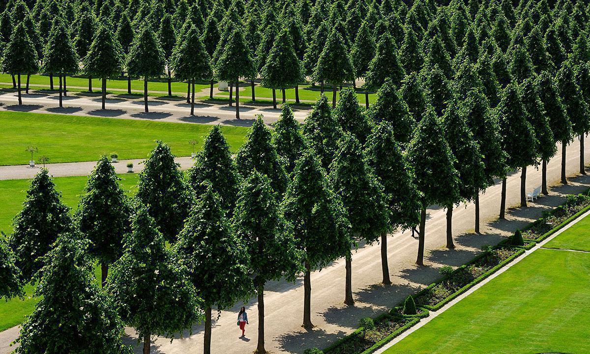 Baumreihen im Schlossgarten Schwetzingen; Foto: Albert Ceolan