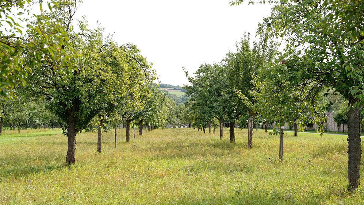 Obstgarten im Garten von Schloss Weikersheim; Foto: Staatliche Schlösser und Gärten Baden-Württemberg, Niels Schubert