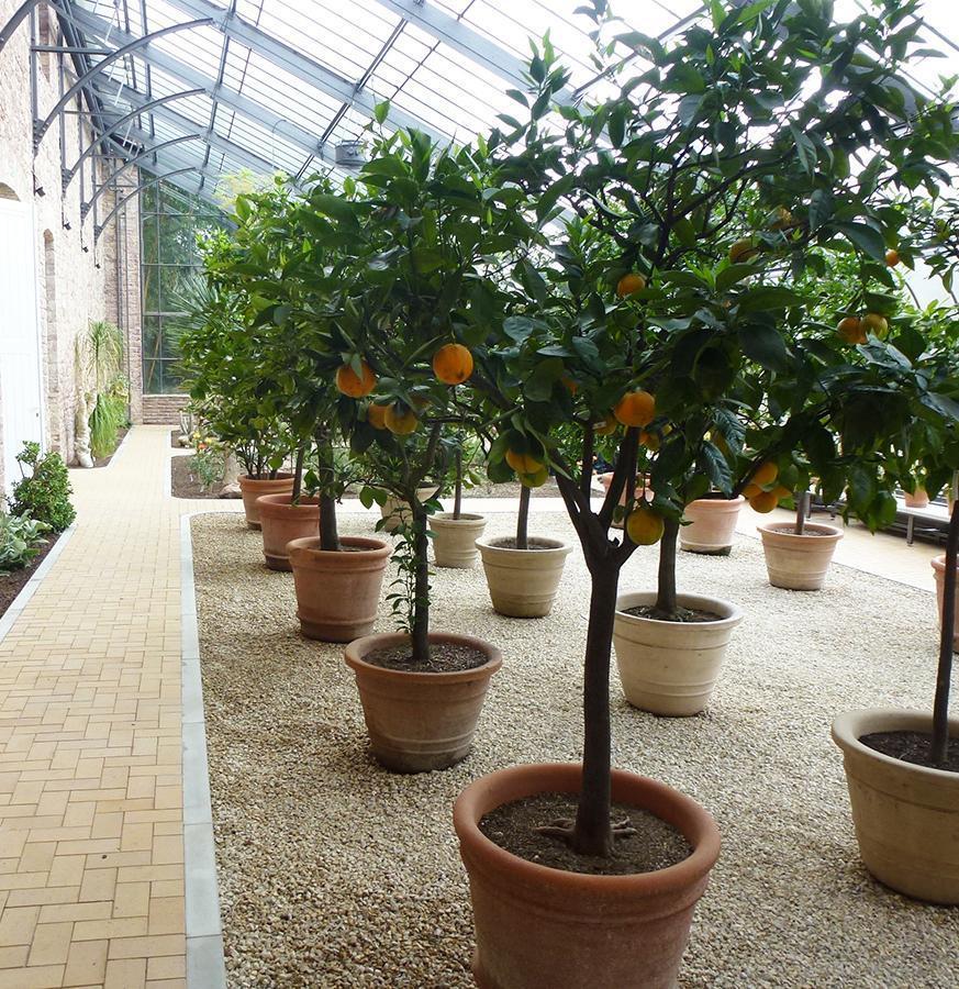 Botanischer Garten Karlsruhe öffnungszeiten: Kübelpflanzen Im Winterquartier