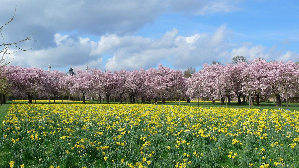 Frühling im Schlossgarten Schwetzingen; Foto: Staatliche Schlösser und Gärten Baden-Württemberg, Ortsverwaltung Schwetzingen