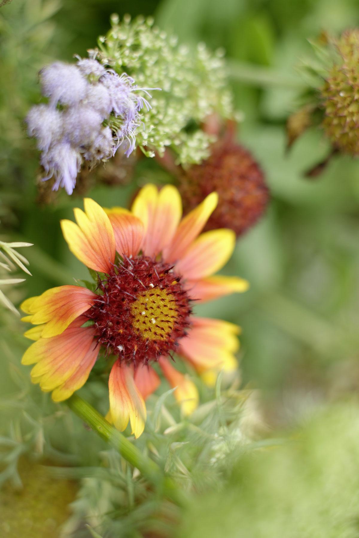 Blüten im Schlossgarten Weikersheim; Foto: Staatliche Schlösser und Gärten Baden-Württemberg, Niels Schubert