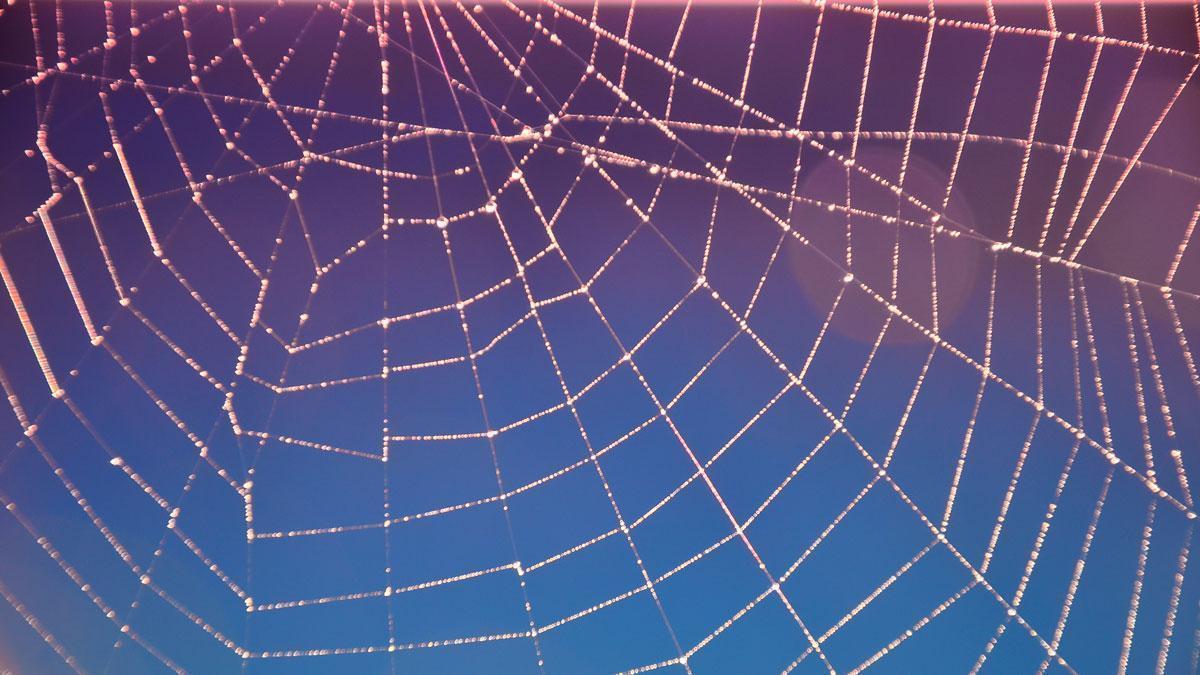 Spinnennetz im Schlossgarten Weikersheim; Foto: Staatliche Schlösser und Gärten Baden-Württemberg, Ortsverwaltung Weikersheim