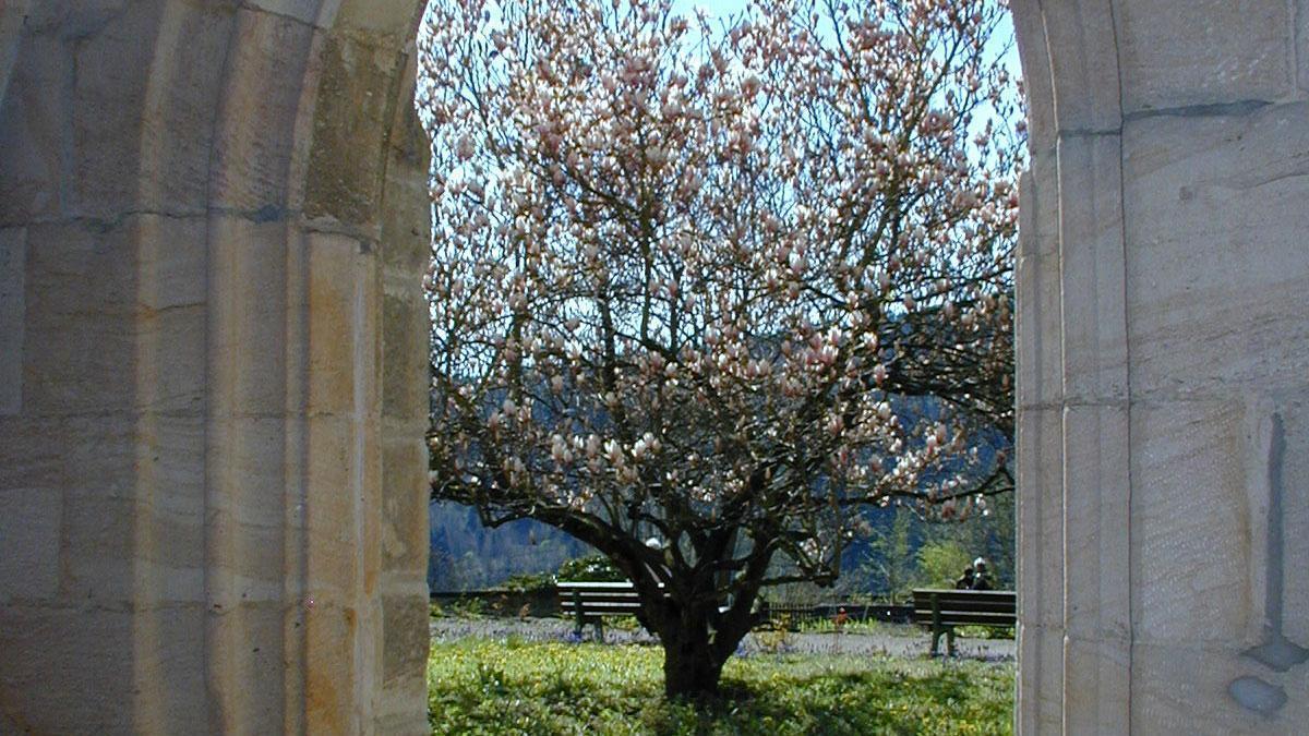 Klostergarten im Kloster Lorch; Staatliche Schlösser und Gärten Baden-Württemberg, Ortsverwaltung Ludwigsburg