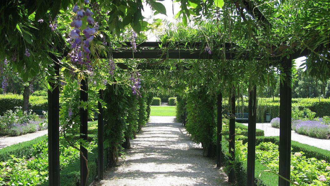 Schloss Rastatt, Schlossgarten, Blauregen