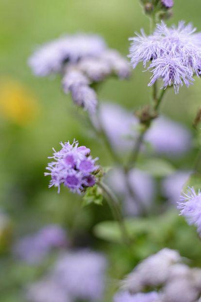 Blüten im Schlossgarten Weikersheim