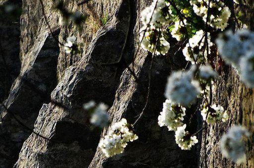 Blüten im Schlossgarten Weikersheim; Foto: Staatliche Schlösser und Gärten Baden-Württemberg, Ortsverwaltung Weikersheim