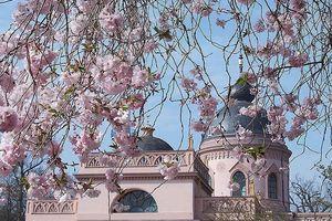 Schloss und Schlossgarten Schwetzingen, Kirschgarten mit Moschee