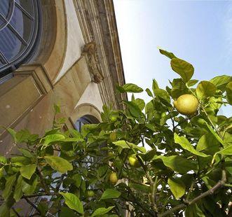 Zitrusfrucht vor Orangerie im Schlossgarten Weikersheim