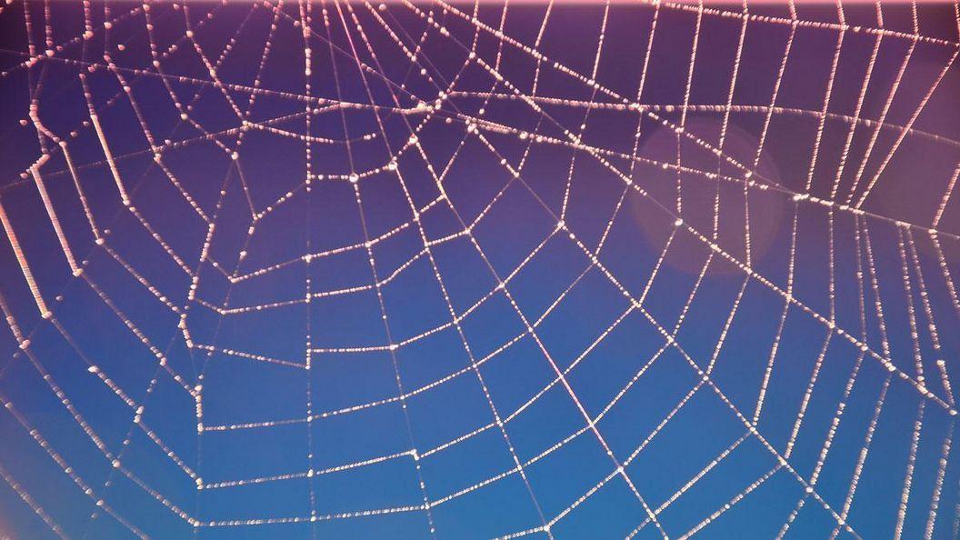 Spinnennetz im Schlossgarten Weikersheim