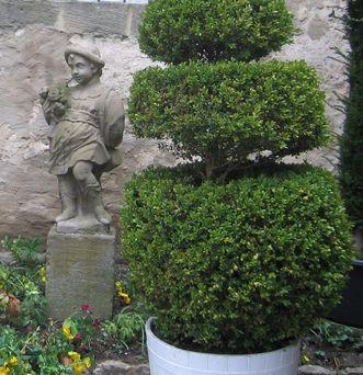 Formgehölz im Schlossgarten Weikersheim; Foto: Peter Kessler